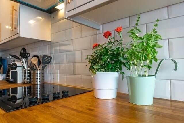 13 Best Plants Decorating Kitchen